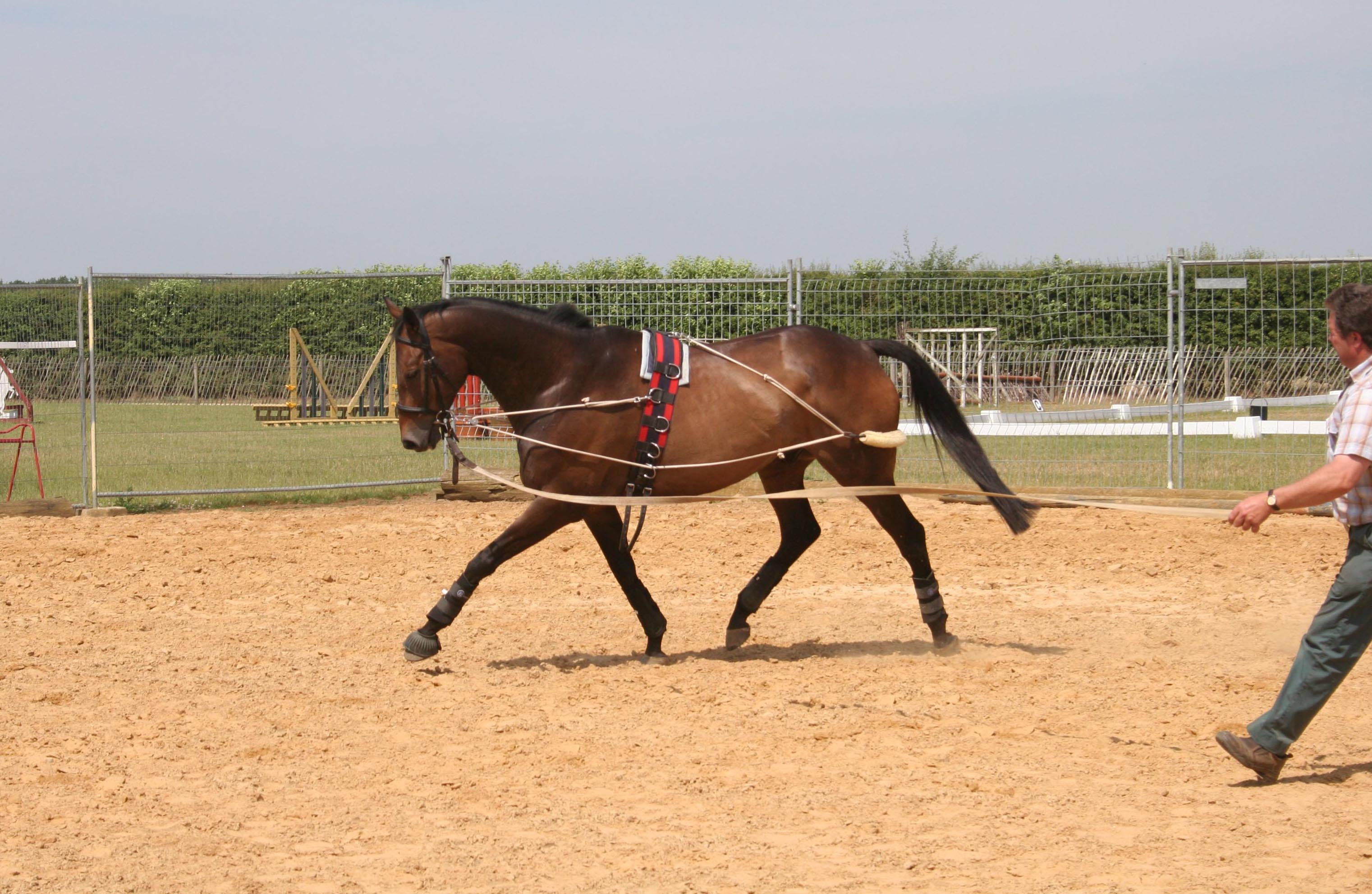 horse being lunged in pessoa