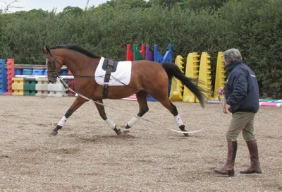 working a horse on the lunge