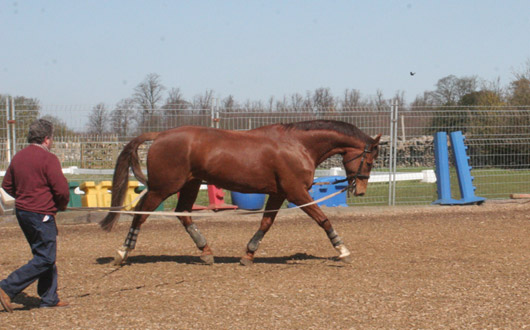 Re-schooling after injury