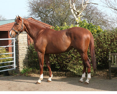 Ex-racehorse for retraining