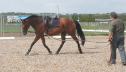 Horse working correctly on the lunge