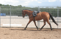 horse working in side reins