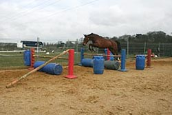 Horse loose jumping in a grid