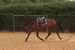 demonstrating an overbent horse on long reins