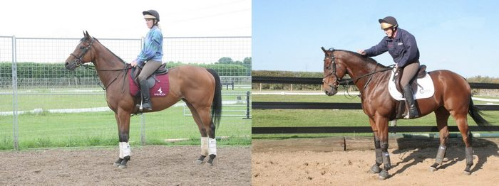 Comparison photo showing how a horse changes